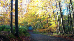 Path in the autumn forest. Stock Footage
