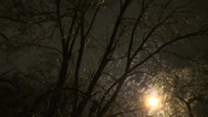 Stock Video Footage of Trees under way in city at night winter
