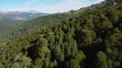 Stock Video Footage of aerial corsica mountain forest