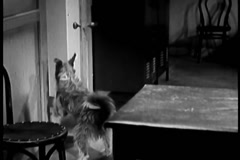 Dog pushing doors open and wandering around house, 1930s - stock footage