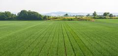 Stock Photo of fields near voghera