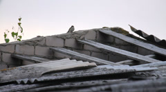 Bird on the roof of a neglected building on summer day, sparrow Stock Footage