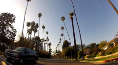 Driving In Beverly Hills California With Tall Palms And Sun Flare Stock Footage