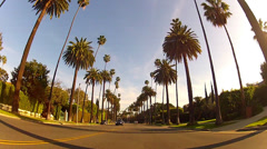 Driving Suburban Beverly Hills California Under Tall Palm Trees Stock Footage