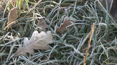 Freeze green grass garden meadow cold winter time season day leaf pattern frost  Stock Footage
