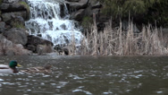 Stock Video Footage of Waterfall Lake - 02 - Cascade Rock, Stream, Grass, Pond, Ducks