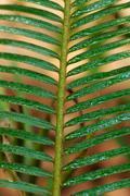 Morning - raindrop on fern . Stock Photos