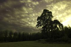 Trees in a meadow below a moody sky Stock Photos