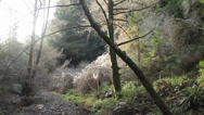 Stock Video Footage of A time-lapse photography of bush in the Muir wood forest