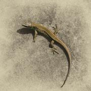 Lizard on a gray natural background Stock Photos