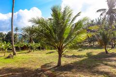 Palm without top, ecology problem - stock photo