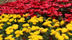 Flowers bloom Stock Footage