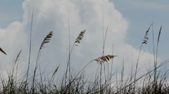 Beach Grass Flowing in the Wind (closeup) Stock Footage