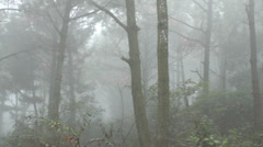 Stock Video Footage of forest murky, foggy