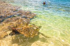 Green Sea Turtle in ocean sea in Maui, Hawaii Stock Photos