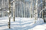 Stock Photo of footpath in sunny winter forest