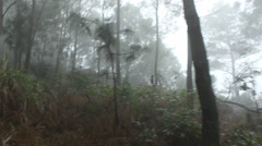 Forest murky, foggy Stock Footage