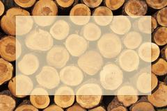 a pile of cut tree trunks with year rings in framework - stock photo