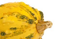 yellow pumpkin green bulbs closeup - stock photo