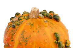 Orange pumpkin green bulbs closeup Stock Photos
