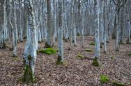 Mystical forest Stock Photos