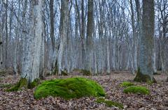 mossy rock in mystic forest - stock photo