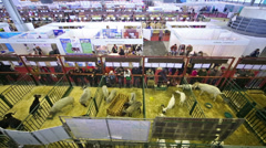 14th All-Russian Agricultural Exhibition Golden Autumn-2012 Stock Footage
