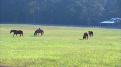 Horse Ranch Grazing Stock Footage