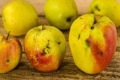 apples, regional organic product. - stock photo