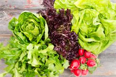Heads of assorted fresh lettuce with radishes Stock Photos