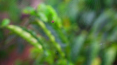 Barely visible spider web with the spider in it's center Stock Footage
