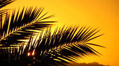 Palm leaves against the sunset Stock Footage