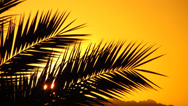 Stock Video Footage of palm leaves against the sunset
