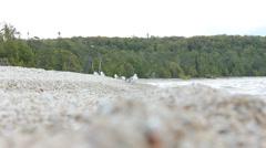 Seagulls on shore Stock Footage
