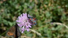 Flower with 3 types of butterflies Stock Footage