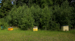Old bee hives in nature in the country in summer Stock Footage