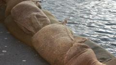 Water next to sandbags (flooding precaution) - stock footage