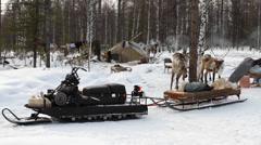 Reindeers 16 Stock Footage