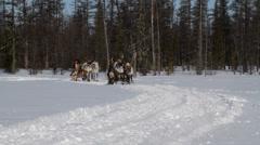 Running Reindeers 11 - stock footage