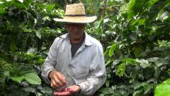 Coffee Farmer, Worker, Plantation, Nature - stock footage