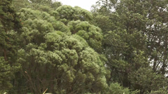 Strong wind bends the branches of trees and grass Stock Footage