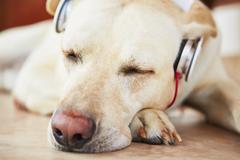Dog is listening music - stock photo