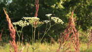 Stock Video Footage of Wildflowers on a sunny day