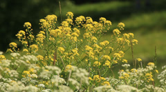 Wildflowers on a sunny day Stock Footage