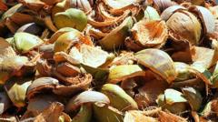 Coconut farm Stock Footage