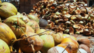 Stock Video Footage of coconut farm