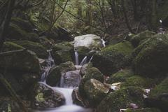Japan, Yakushima, Waterfall in the rainforest, Unesco World Heritage Natural - stock photo