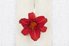 Blossom of red daylilly (Hemerocallis) on spoon and wooden board, close-up Stock Photos