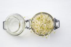 Preserving jar with alfalfa sprouts (Medicago sativa) on white ground - stock photo