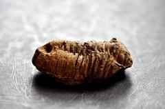 Trilobite fossil Stock Photos